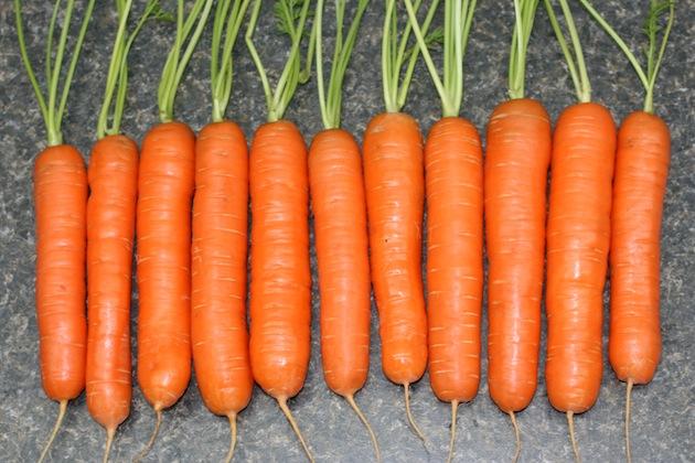 Сорта морковки сорта моркови выращивание моркови