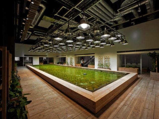 Metri Quadri Minimi Ufficio : Quando lufficio diventa green marketingarena